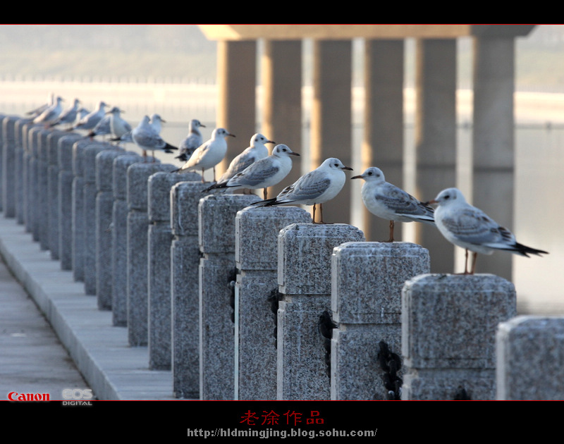 标签: 葫芦岛 五里河 公园 海鸥;;