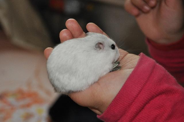 看到窗台上的小笼子里面养了一只可爱的小仓鼠.