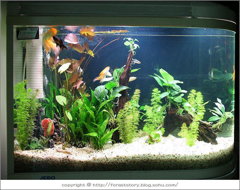 自制上滤鱼缸设计图展示