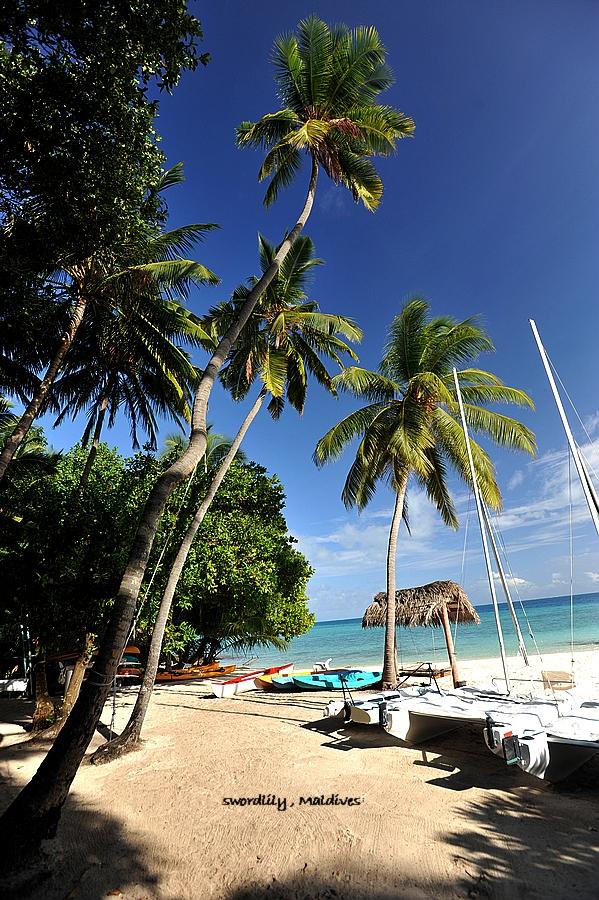 岛屿椰树竖屏手机壁纸