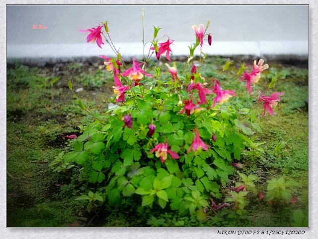【原创】Flowers of Spring (摄影)