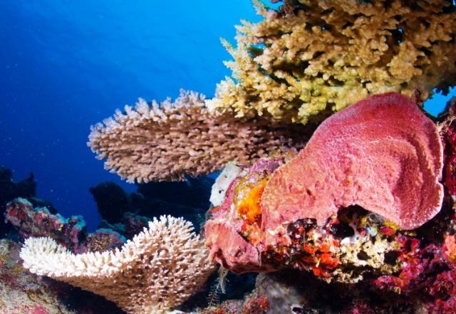 斐济最摄人心魄的地方在于斐济群岛周围的海底