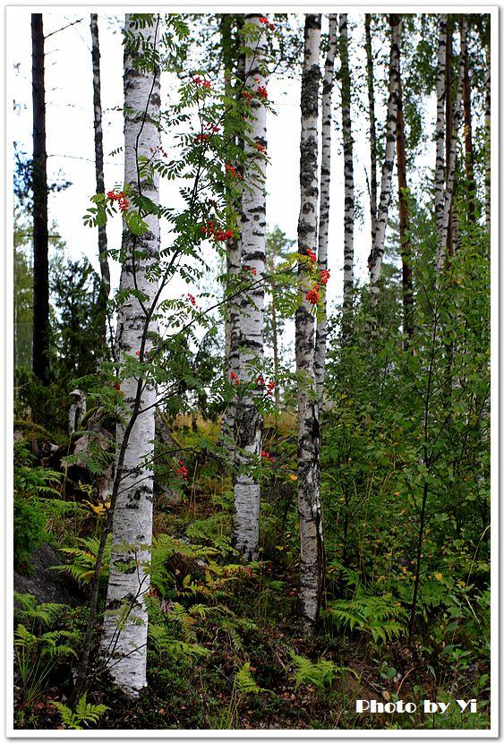 北欧风情6——芬兰国家森林公园