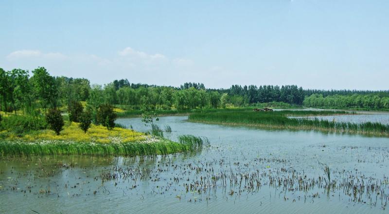 """5月13日早餐后,从怡生园开车前往汉石桥湿地游览。北京汉石桥湿地自然风景区是北京唯一的大型芦苇沼泽湿地,也是多种珍稀水禽的栖息地。其中发现的国家级重点保护野生动物2种,级重点野生动物17种。这里有大面积的芦苇荡,在北京地区更是绝无仅有,由此赢得了""""京东大芦荡""""、京郊""""小白洋淀""""的别称。这一天天高云淡,虽然风仍旧很大,有5、6级,但很晴朗,能见度很好,适于拍摄。 汉石桥位于顺义东部杨镇附近。距离城区35公里。景区位于木燕路旁,目前免费,汽车可以开进去,如果"""
