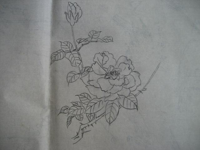 月季花的素描画法图片展示