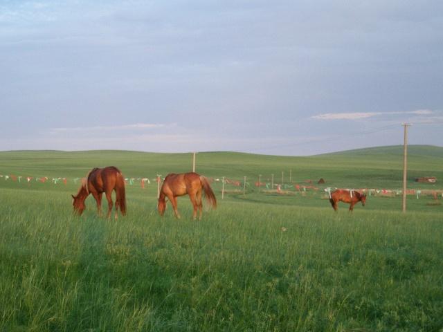 蒙古包里是红漆木板地