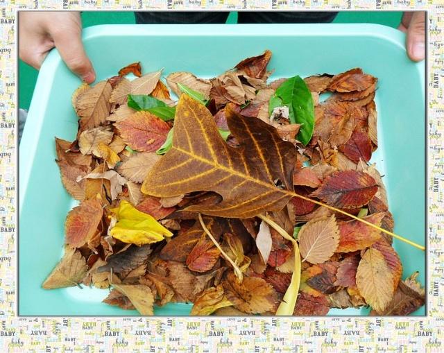 天气渐凉,秋天到了,树上的小树叶儿也飘落下来了,落在操场上,像星星