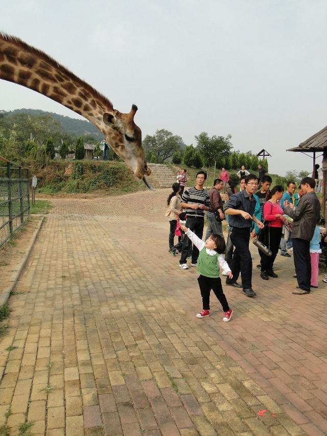 【国庆游记】我爱动物——青岛野生动物园游记