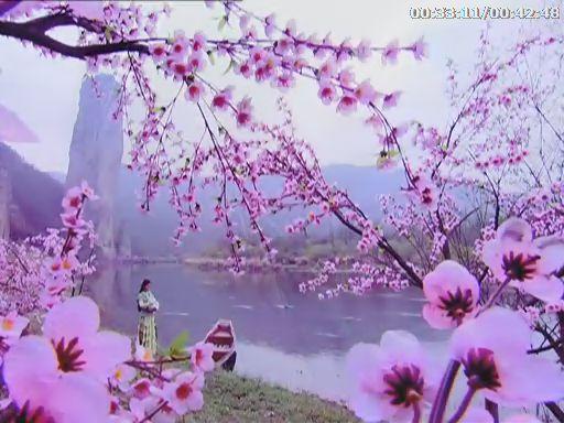 春天到了,小柳树发芽了