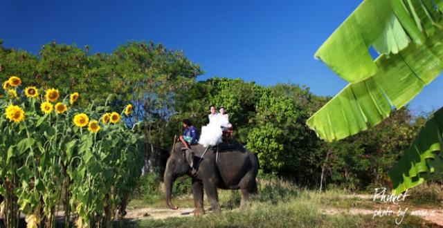 大象几八有多长图片