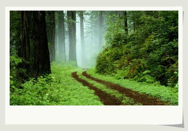 一片小树林
