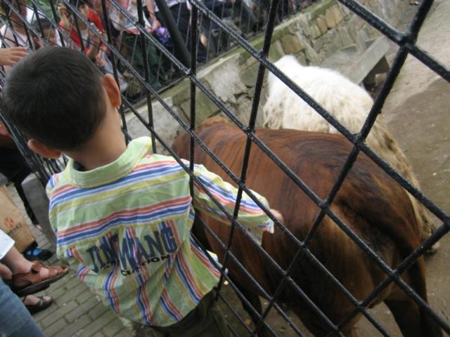 武汉动物园快乐六一游