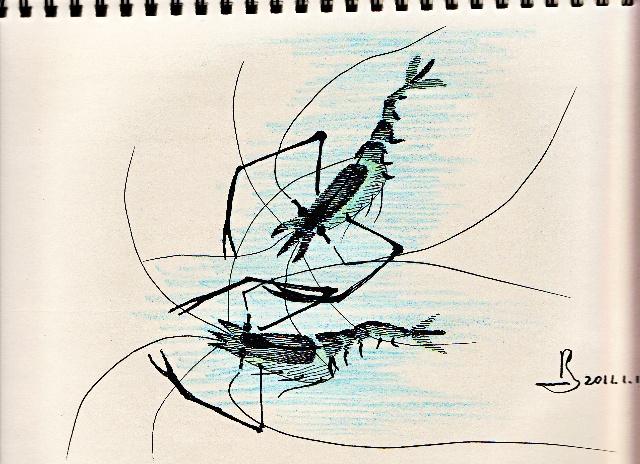 钢笔画《虾》——临摹习作