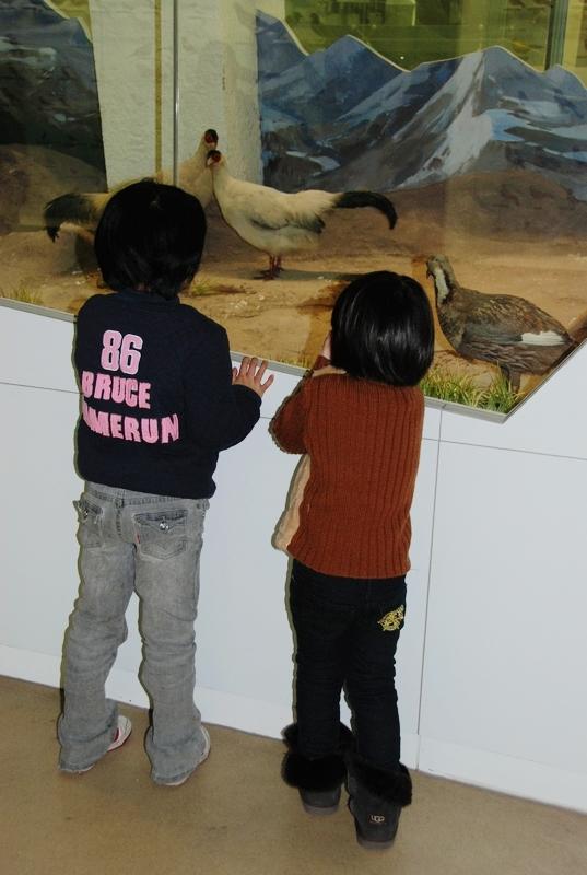 国家动物博物馆展示馆总建筑面积7300平方米,其中展览面积5500平方米,共分为三层,建筑格局仿法国自然历史博物馆。具有普及动物学知识,宣传环境保护及人与自然和谐共处主题的功能.展示馆下设动物多样性与进化、无脊椎动物、鸟类、濒危动物、蝴蝶、昆虫、动物与人、动物所发展历程.