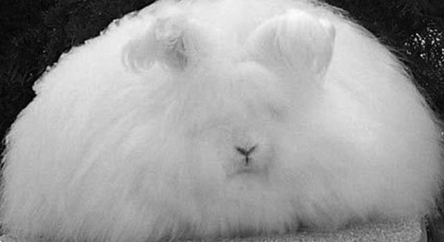 兔子为什么是三瓣嘴?