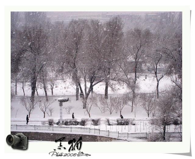 乌鲁木齐,春雪飘舞