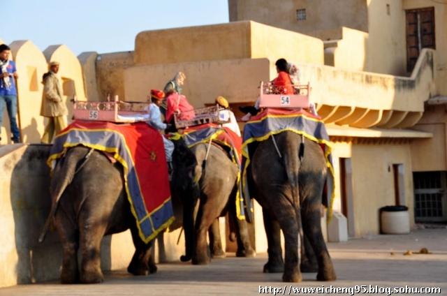 在印度没看到大象用鼻子卷着木头当