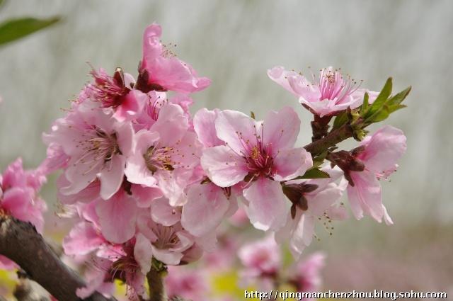 桃花瓣简笔画