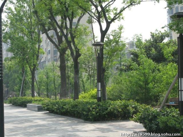 创扬州 森林城市 手抄报 美丽人生