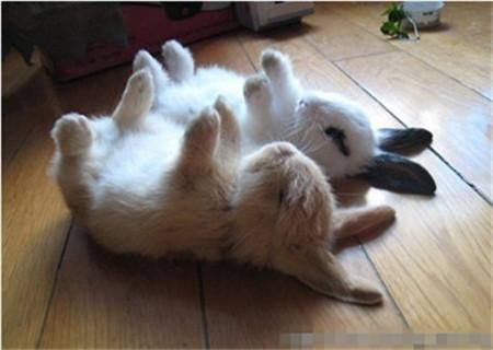 小动物给我们带来的大乐趣(转载)