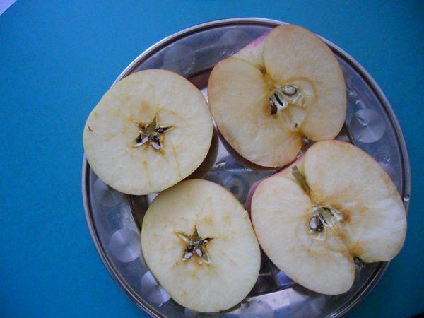 还比较了不同水果的横切面和纵切面的不同
