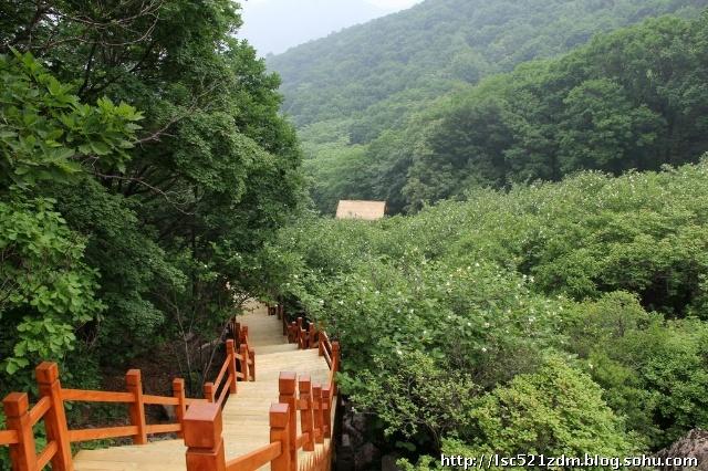以观赏木兰花为节日主题也成为祖山独特的节庆活动.
