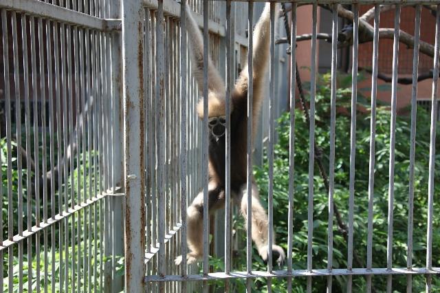 武汉动物园长臂猿等